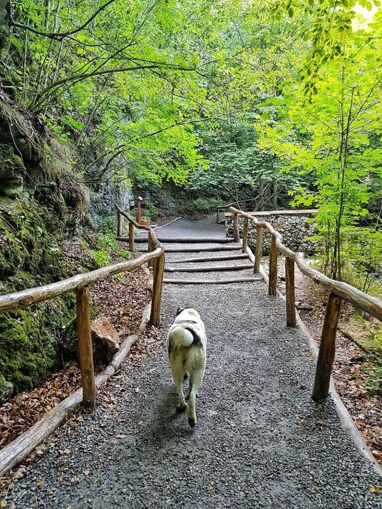 cascada bigăr - anamariapopescu - 4