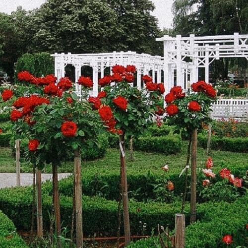 parcul-rozelore-obiective-turistice-timisoara