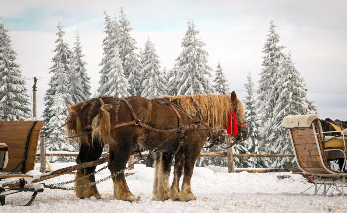 Vacanţă-în-Bucovina-obiective-turistice-Vatra-Dornei